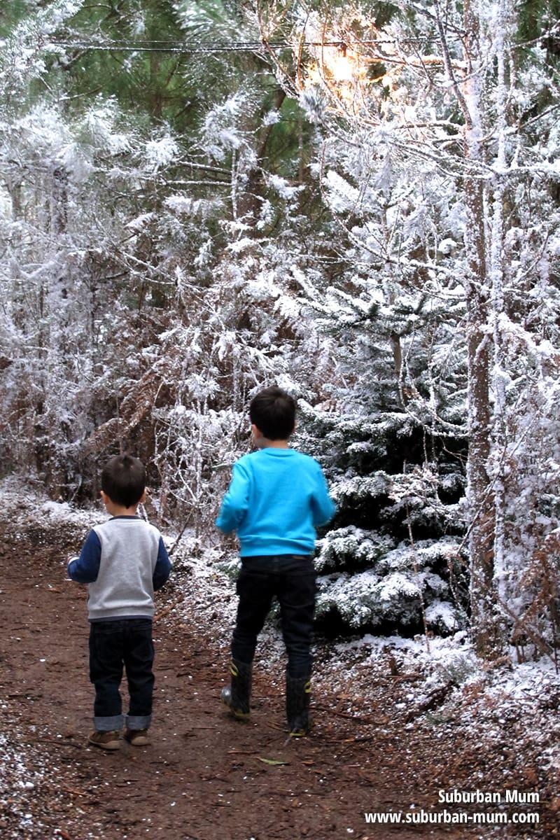 laplanduk-whitmoor-forest