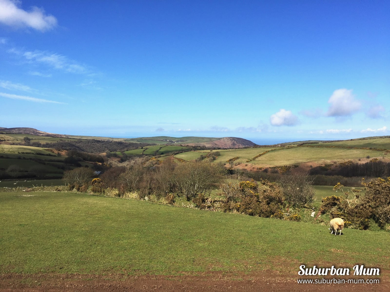 woody-bay-view2