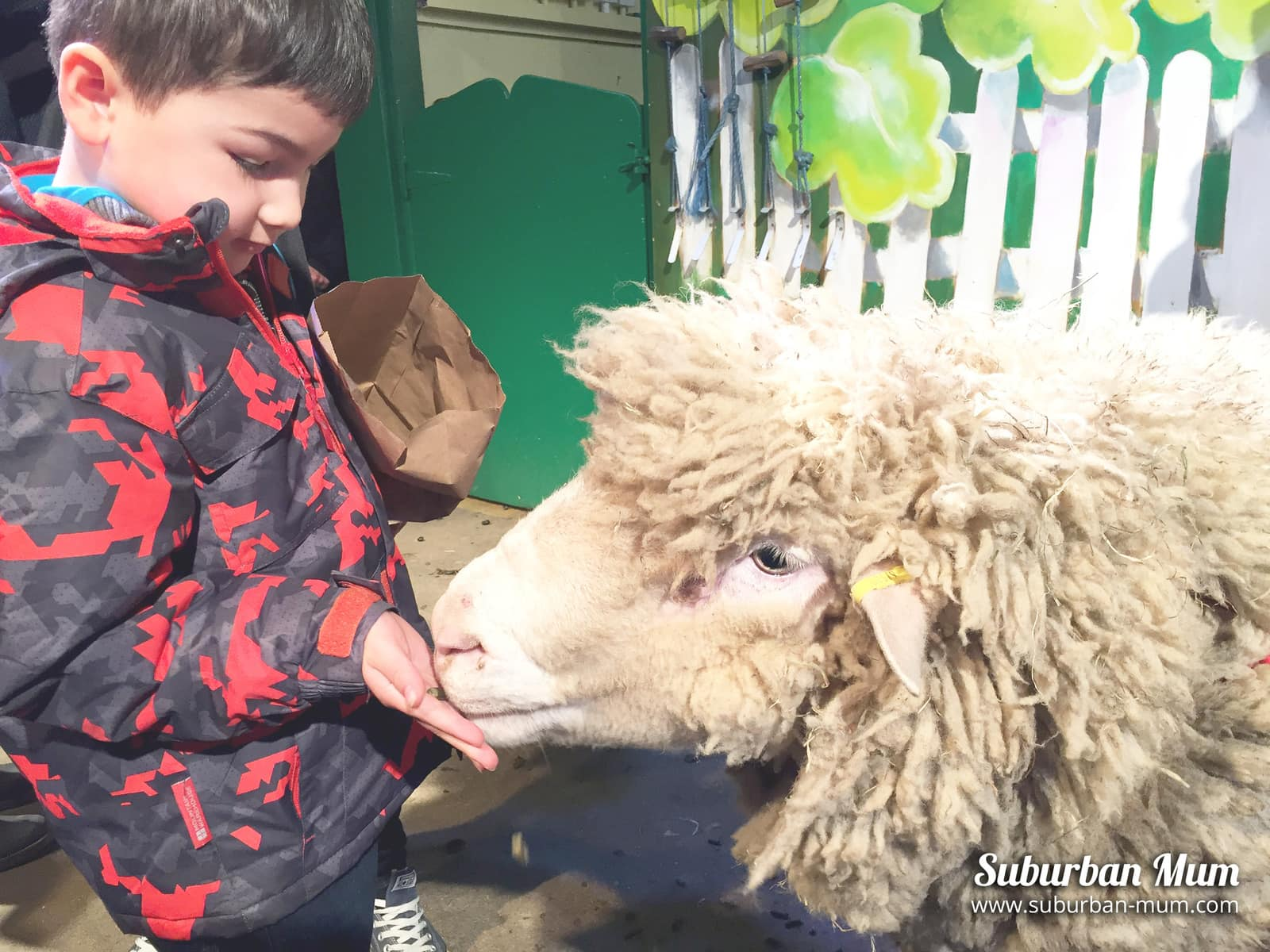 e-feeding-sheep