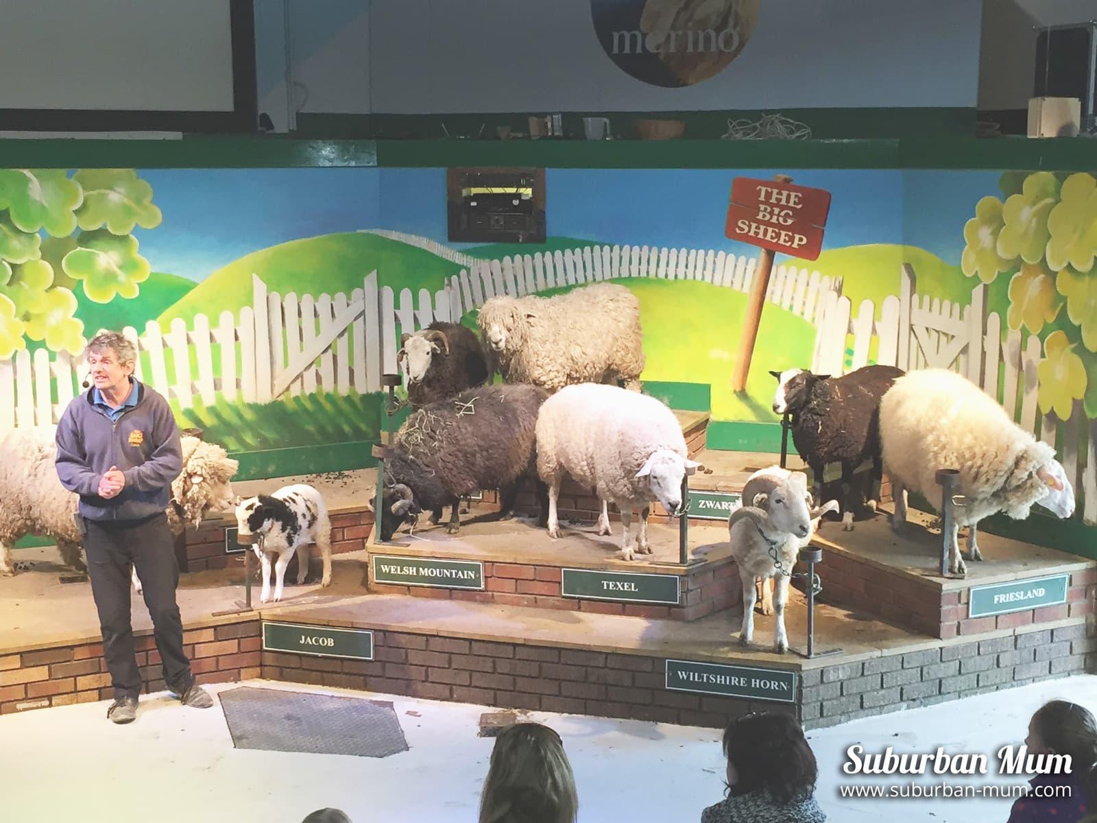 meeting-the-sheep
