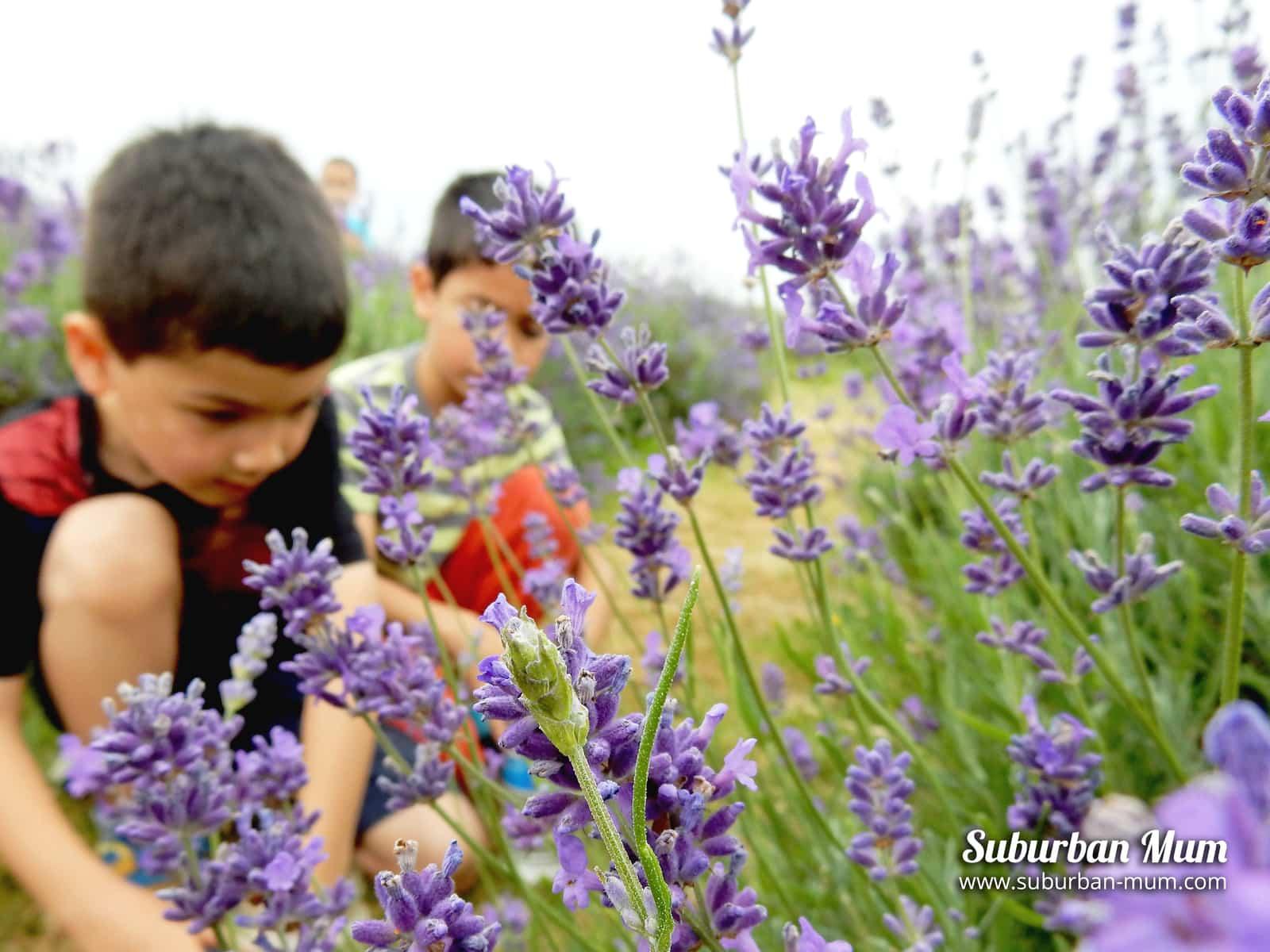 boys-bug-hunting