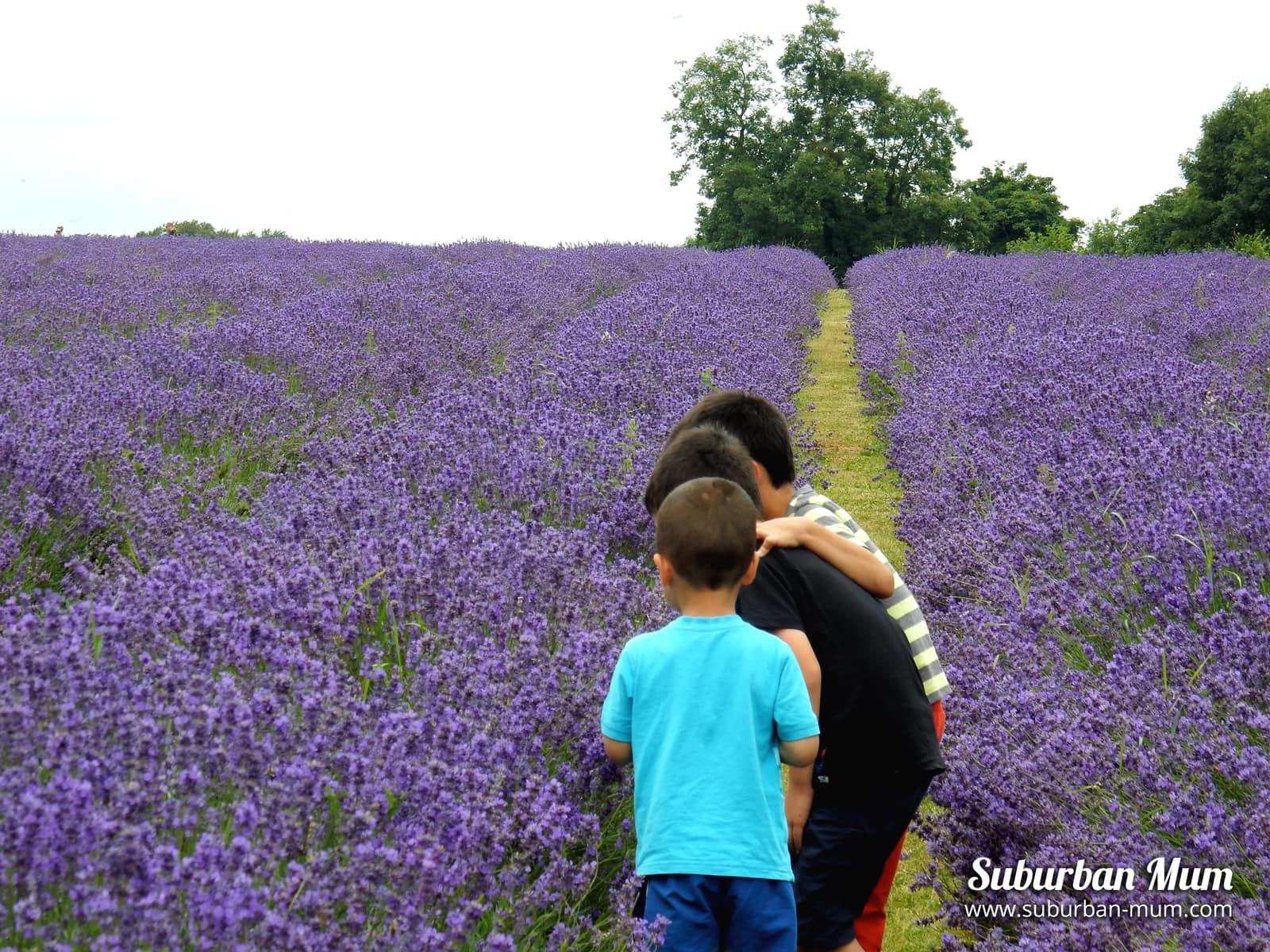boys-group-lavender-field