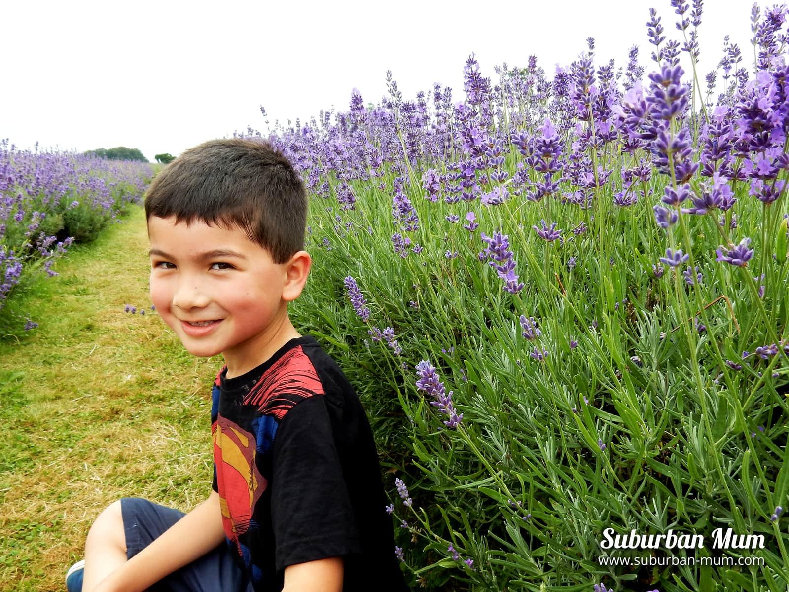 e-lavender-field