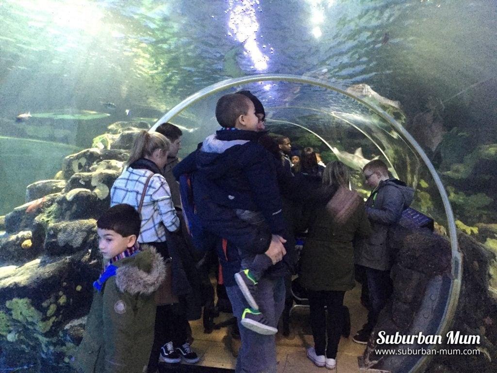 SEA LIFE Centre, Birmingham - Ocean Tunnel