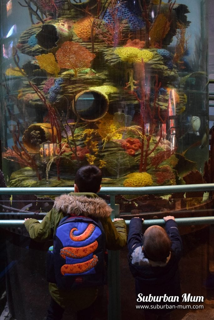 National Sea Life Centre, Birmingham