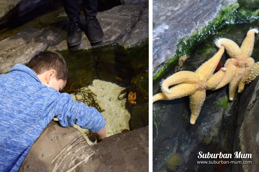 touching starfish