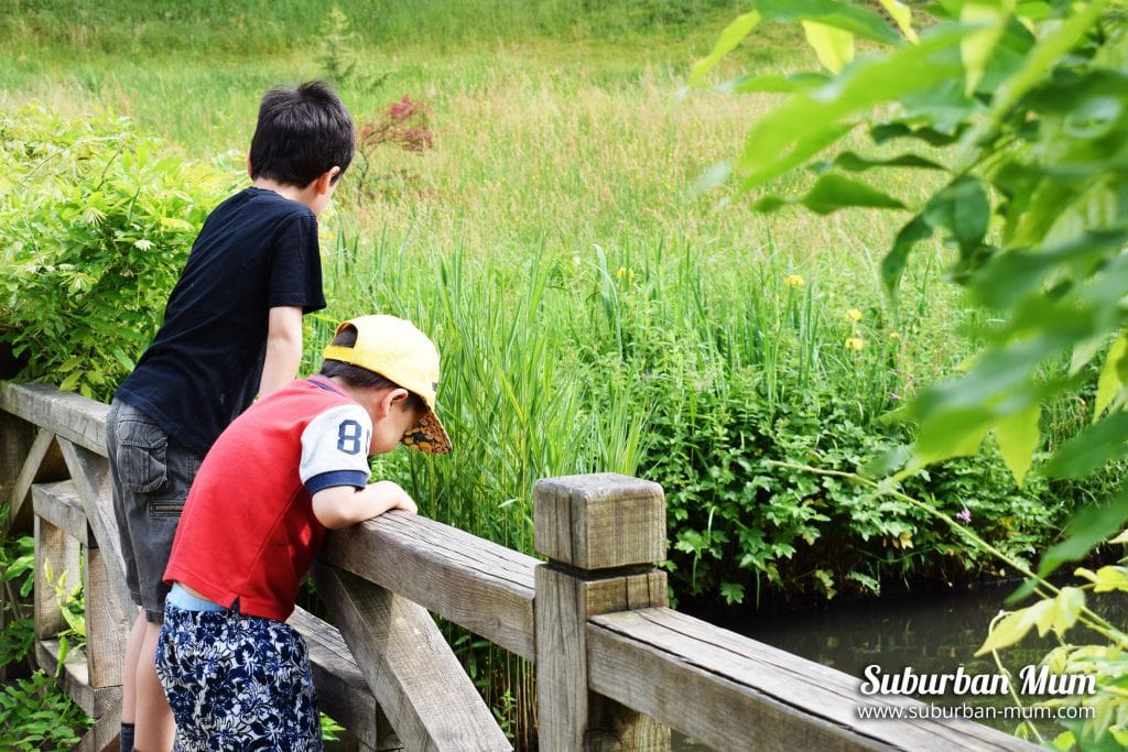 boys-looking-at-pond