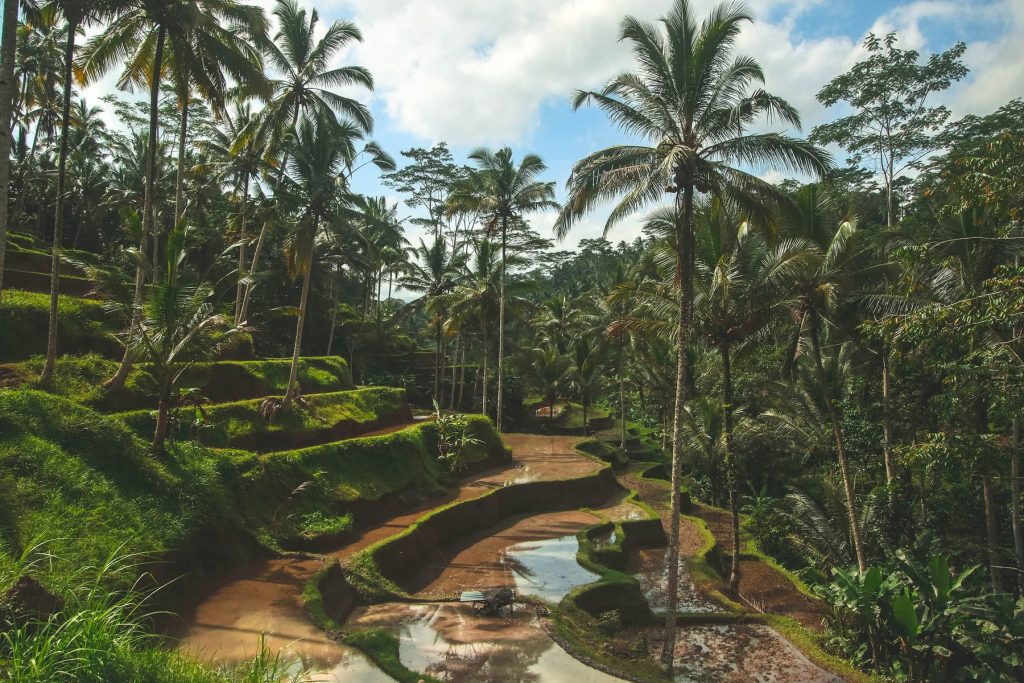 Explore Bali with kids