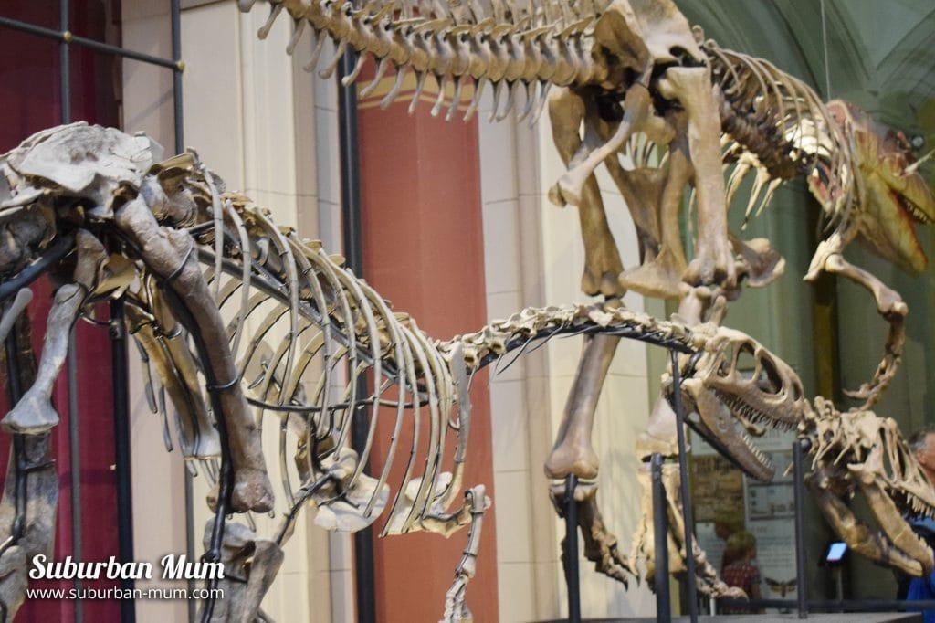 dinos-natural-history-musuem