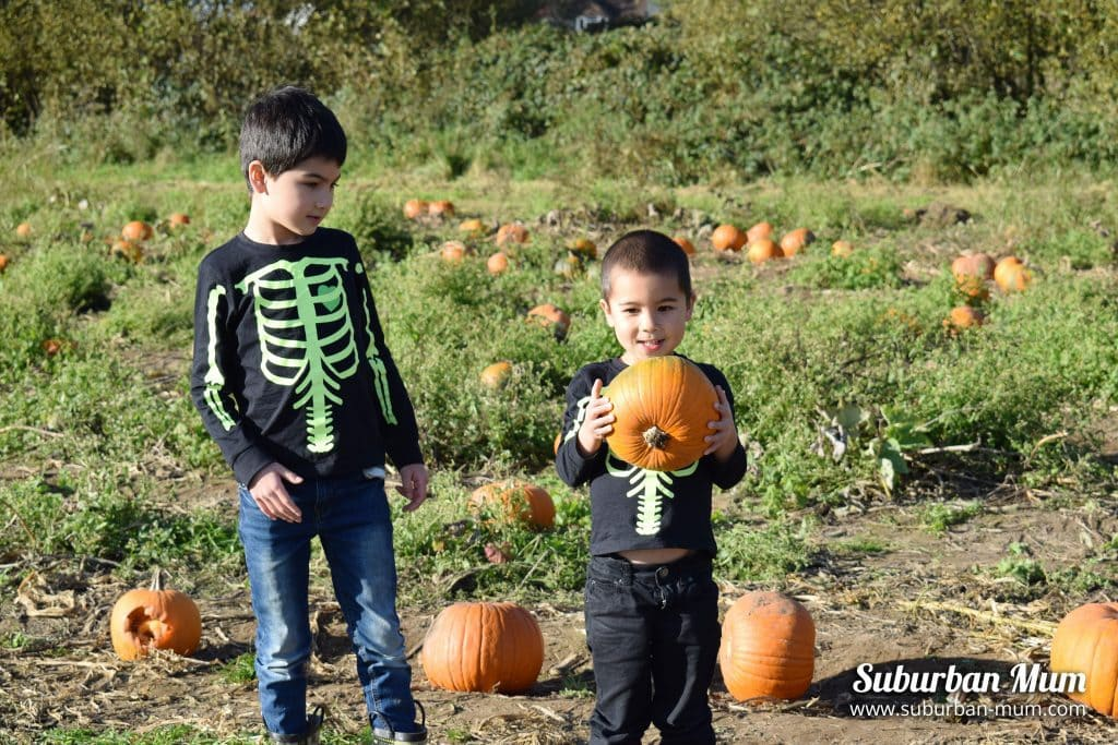 boys-pumpkin-patch