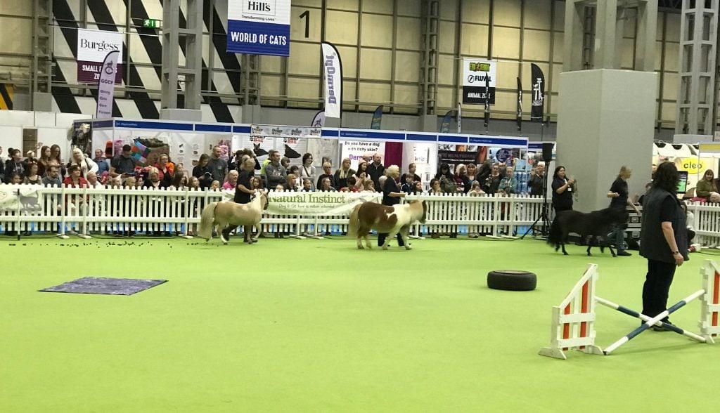 national-pet-show-ponies