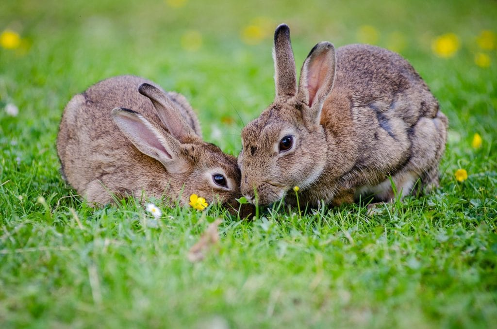 bunny rabbits on the grass