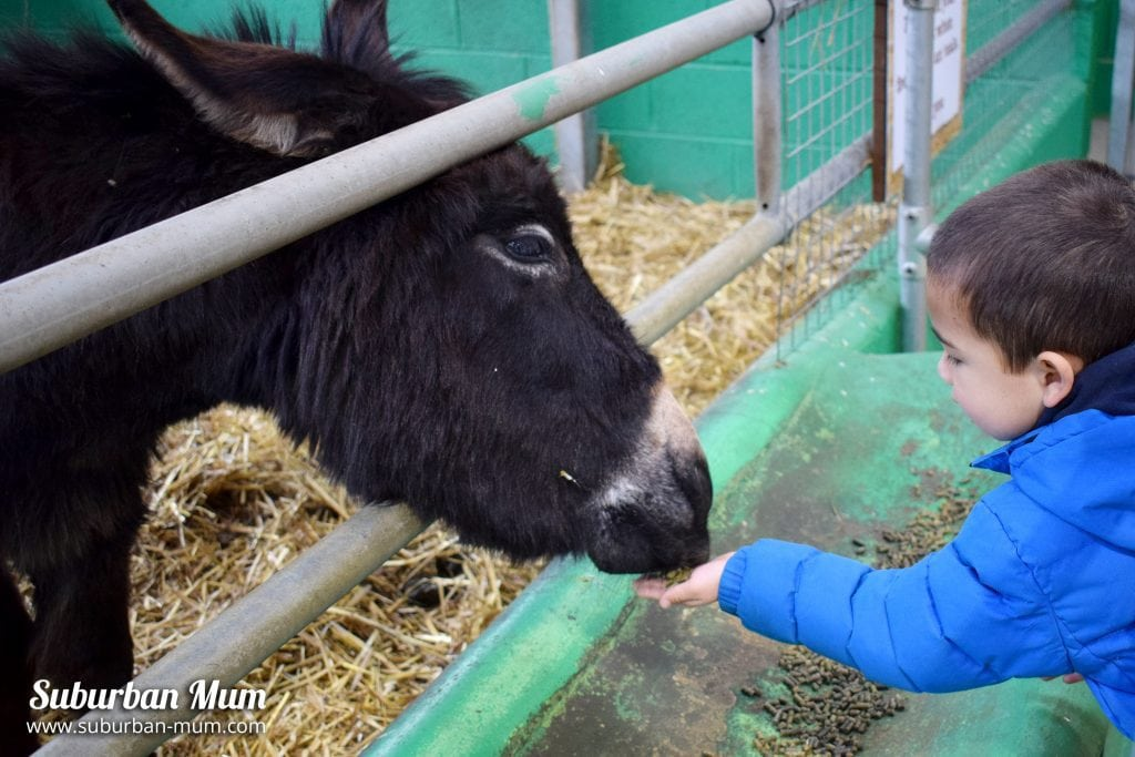 willows-activity-farm-pony-feeding