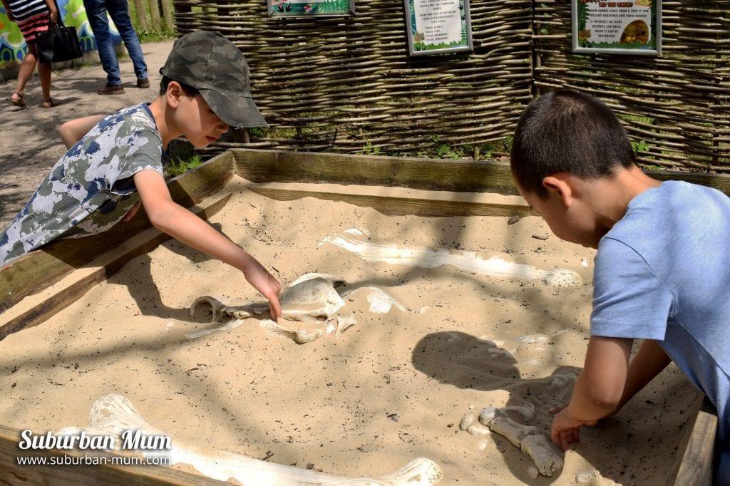godstone–farm-dino-trail-excavating
