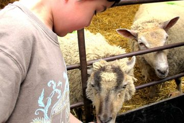 bocketts-farm-feeding-lamb