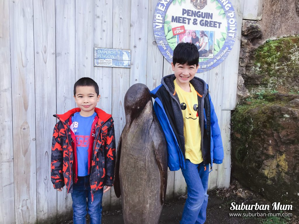 boys-penguins-chessington