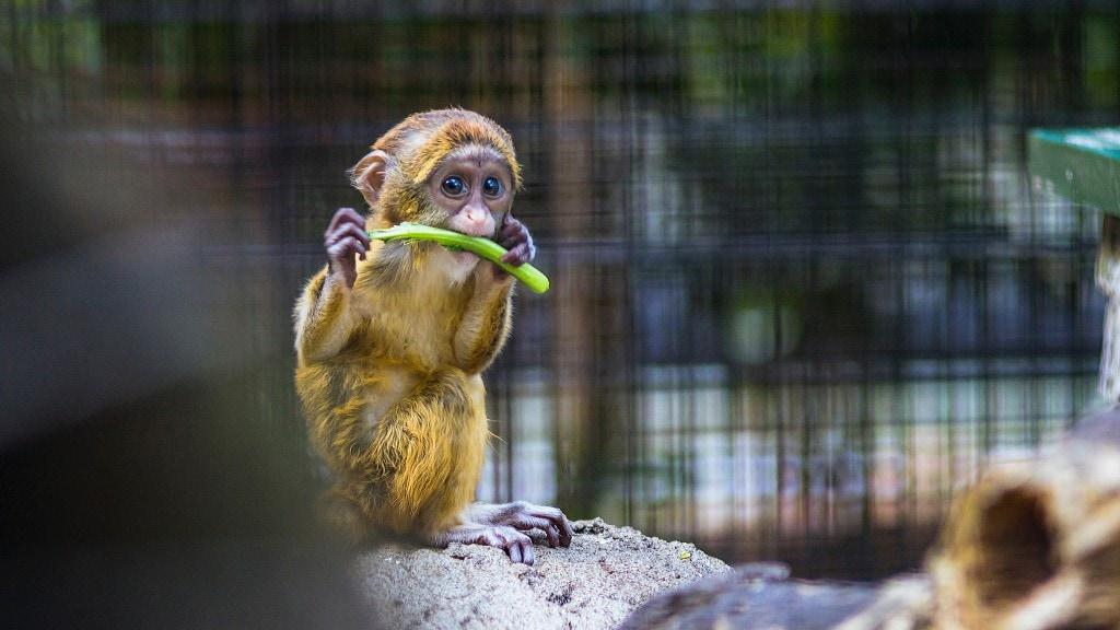 monkey-zoo