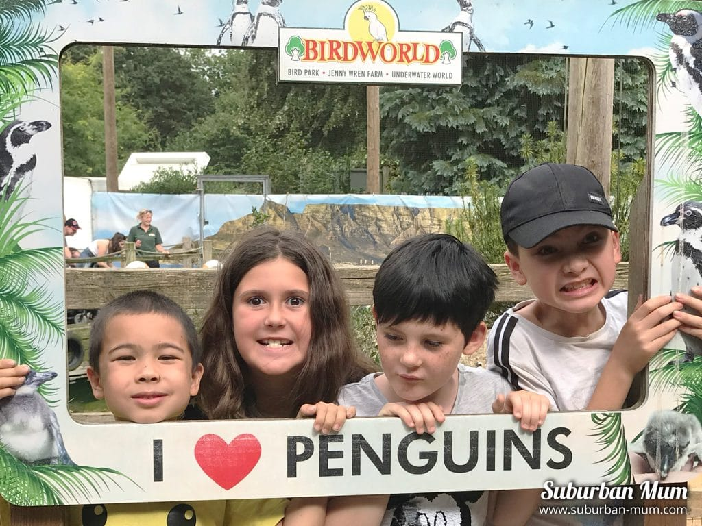 kids-at-birdworld