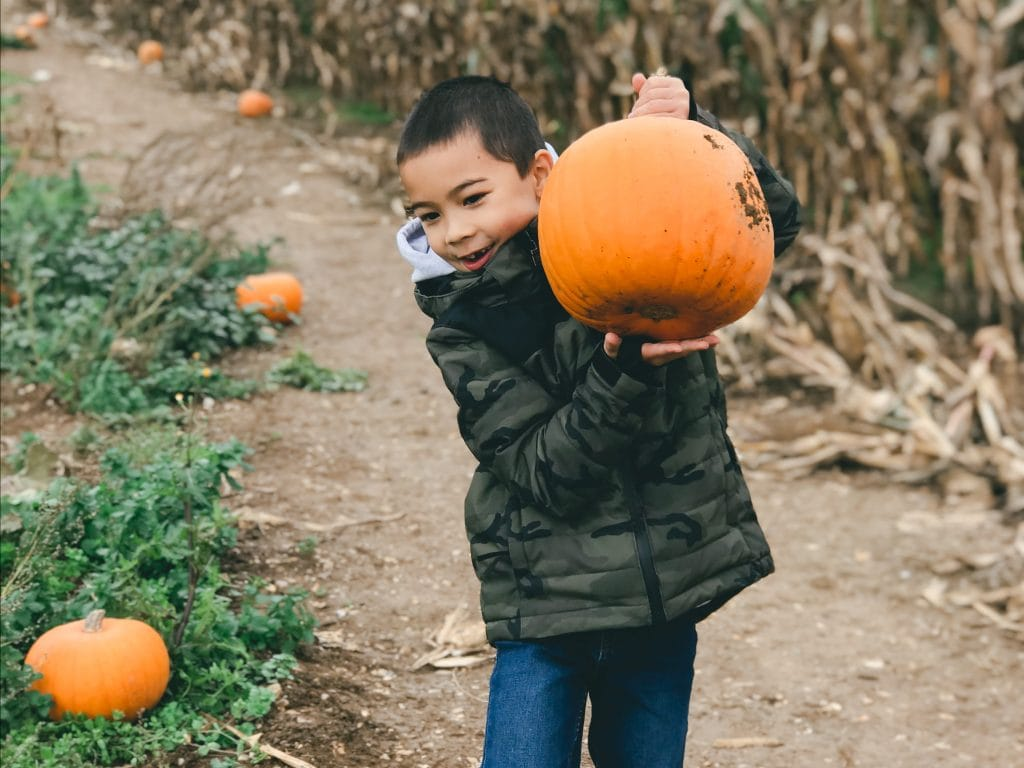 m-willow-farm-pumpkin