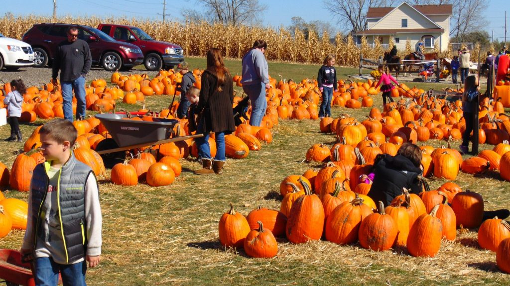 people-pumpkin-picking