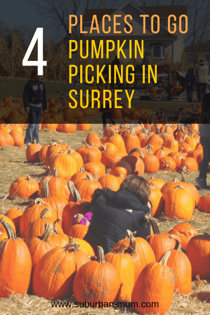 4 places to go Pumpkin Picking in Surrey