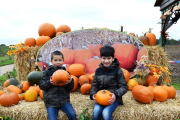 willows-farm-pumpkin-patch