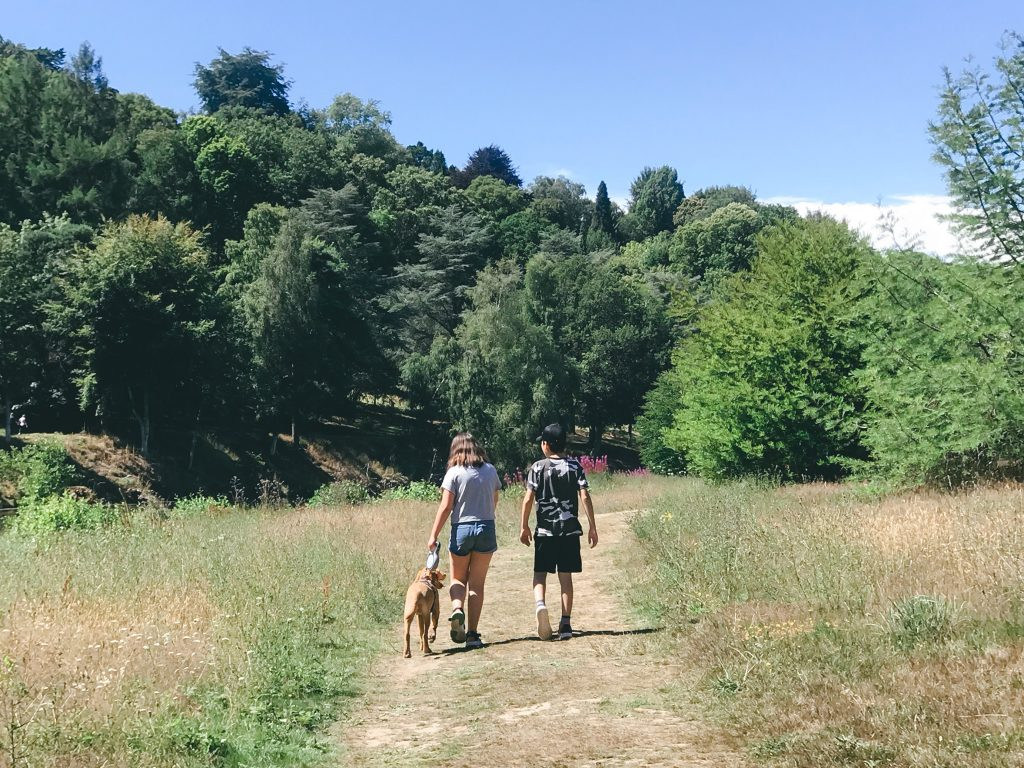dog-walking-winkworth-aboretum