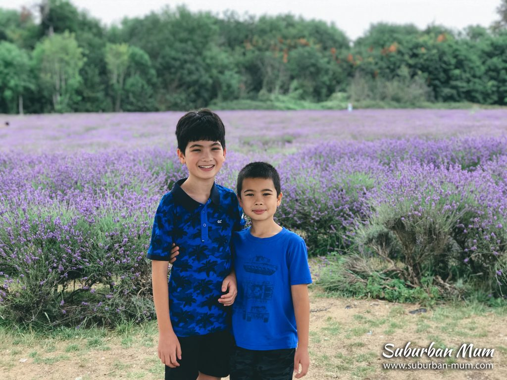 boys-mayfield-lavender