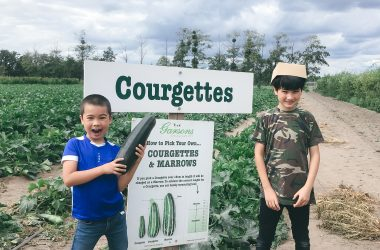 courgette-picking-garsons-farm-ft