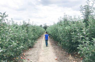 m-picking-apples-garsons-farm-ft