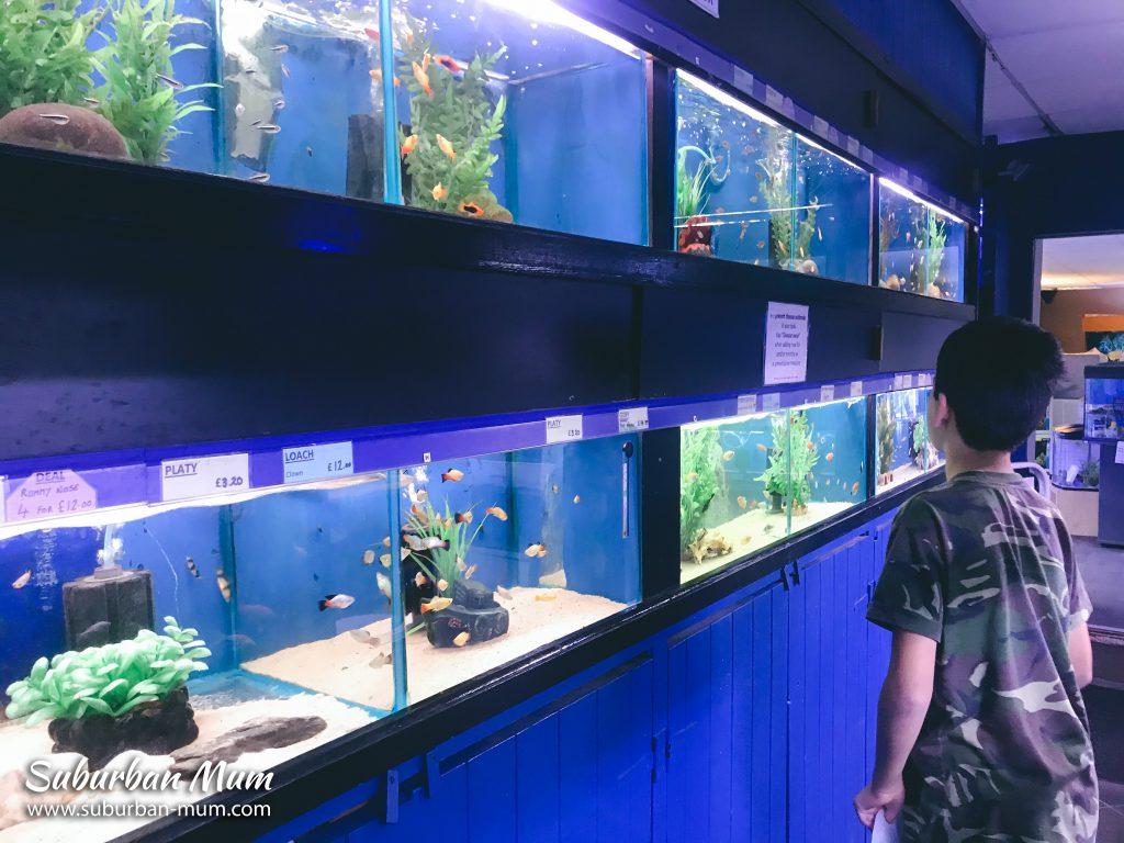 e-fish-aquarium